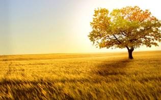 yellow fall fied