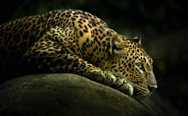 Animals Wallpaper Set 15 Awesome Wallpapers