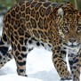 Animals Wallpaper Set 29 Awesome Wallpapers