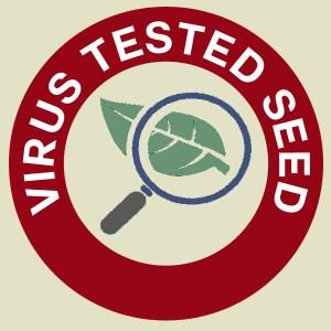 Virus Tested Seed