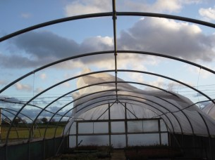 The remains of a polytunnel cover