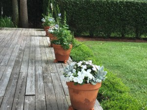Deck containers with color