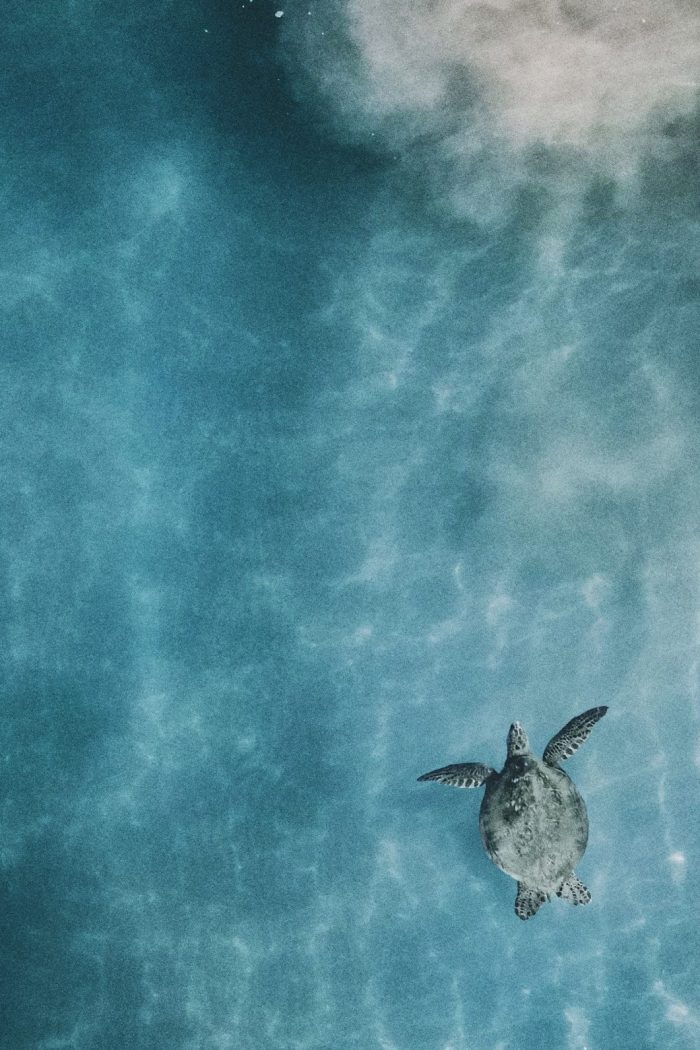 The Best Places To See Turtles In The Wild