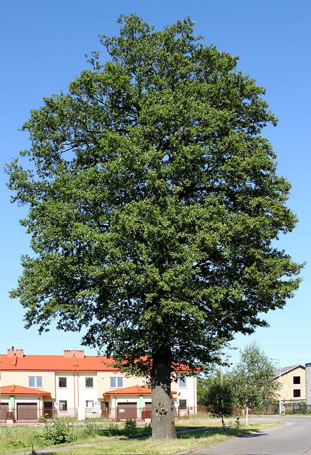 Fir tree grows inside man's lungs