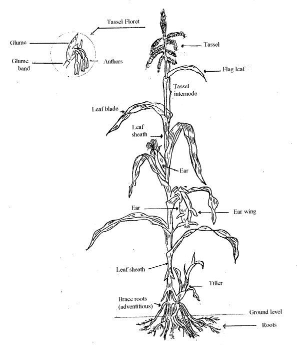 awkward botany – citizen botany for the phytocurious