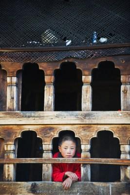 Asia, Bhutan, Phobjikha Valley, GangteyGompaMonastery, monk at window