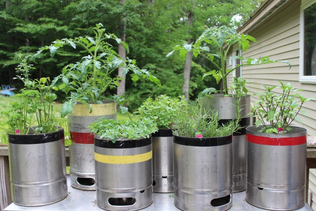 too busy for a garden- containers