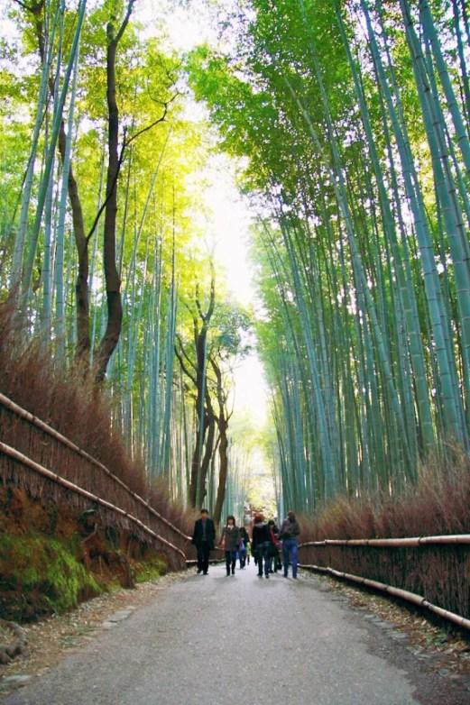 Bambushain in Arashiyama