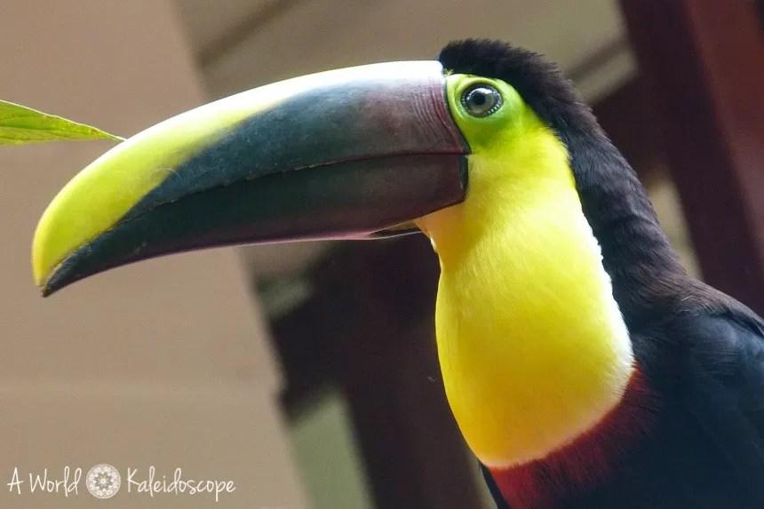 backpacking-rundreise-costa-rica-nicaragua-panama-tucan