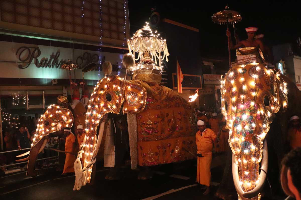 elefanter i Esala Perahera-paraden