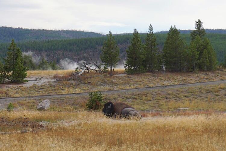Yellowstone National Park Photo Diary 27
