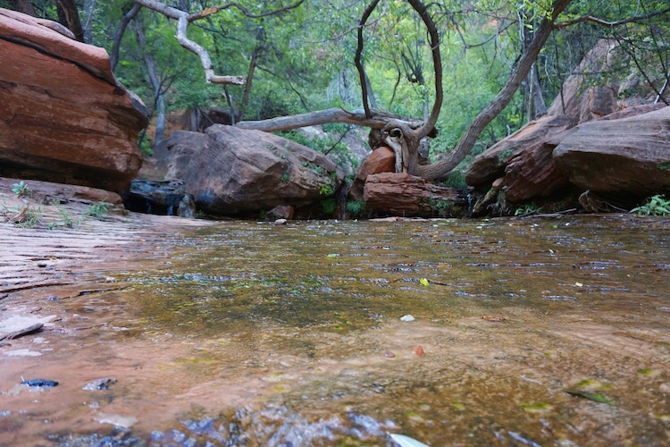 Zion National Park_Photo Diary 23