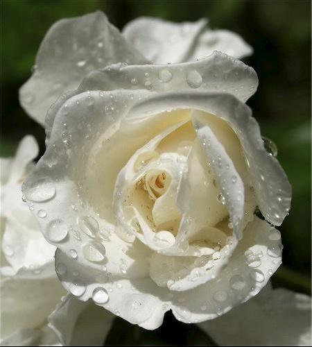 fleurs pour nos anges