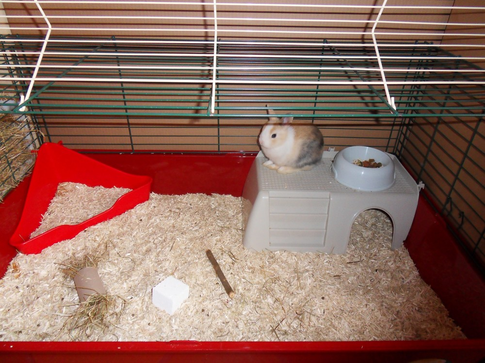 https forum doctissimo fr animaux hamsters lapins amenage cage lapin sujet 8468 1 htm