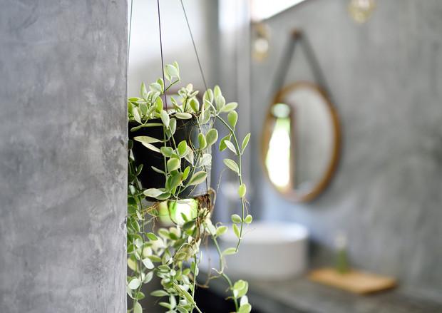 plantas de interiores que viven mucho