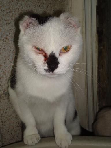 Roman cat cared for at Torre Argentina Sanctuary  To Italy again