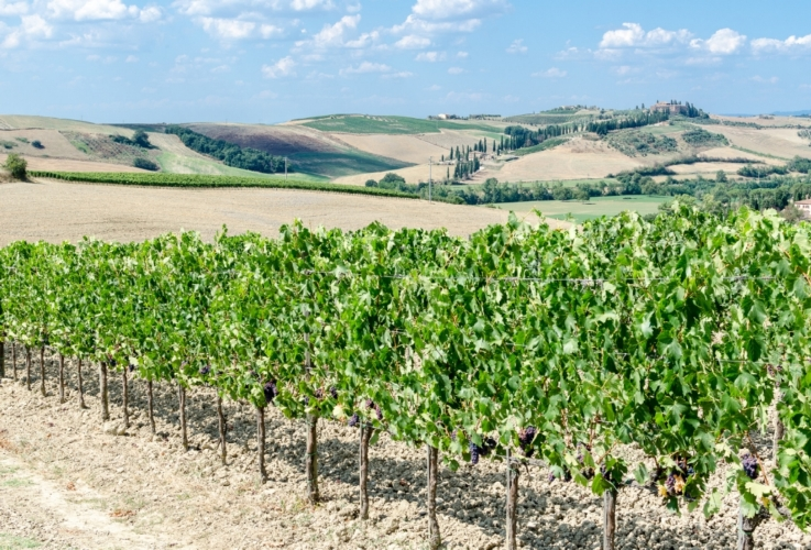 Toscana il premio Touring allinnovazione agricola