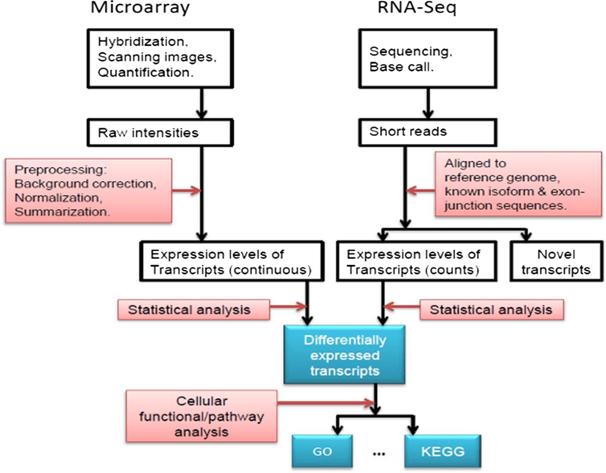 hight resolution of gene v dna v rna diagram