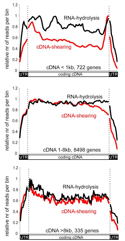 small resolution of gene v dna v rna diagram