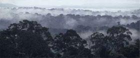 Bacia do Congo / ©: WWF