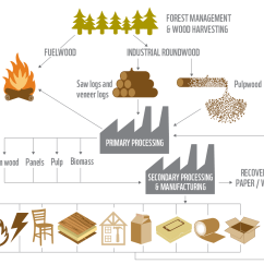 How To Construct A Tree Diagram Discovery 2 Wiring Wwf - Industry Key Conserving Forests As Demand For Wood Projected Triple By 2050