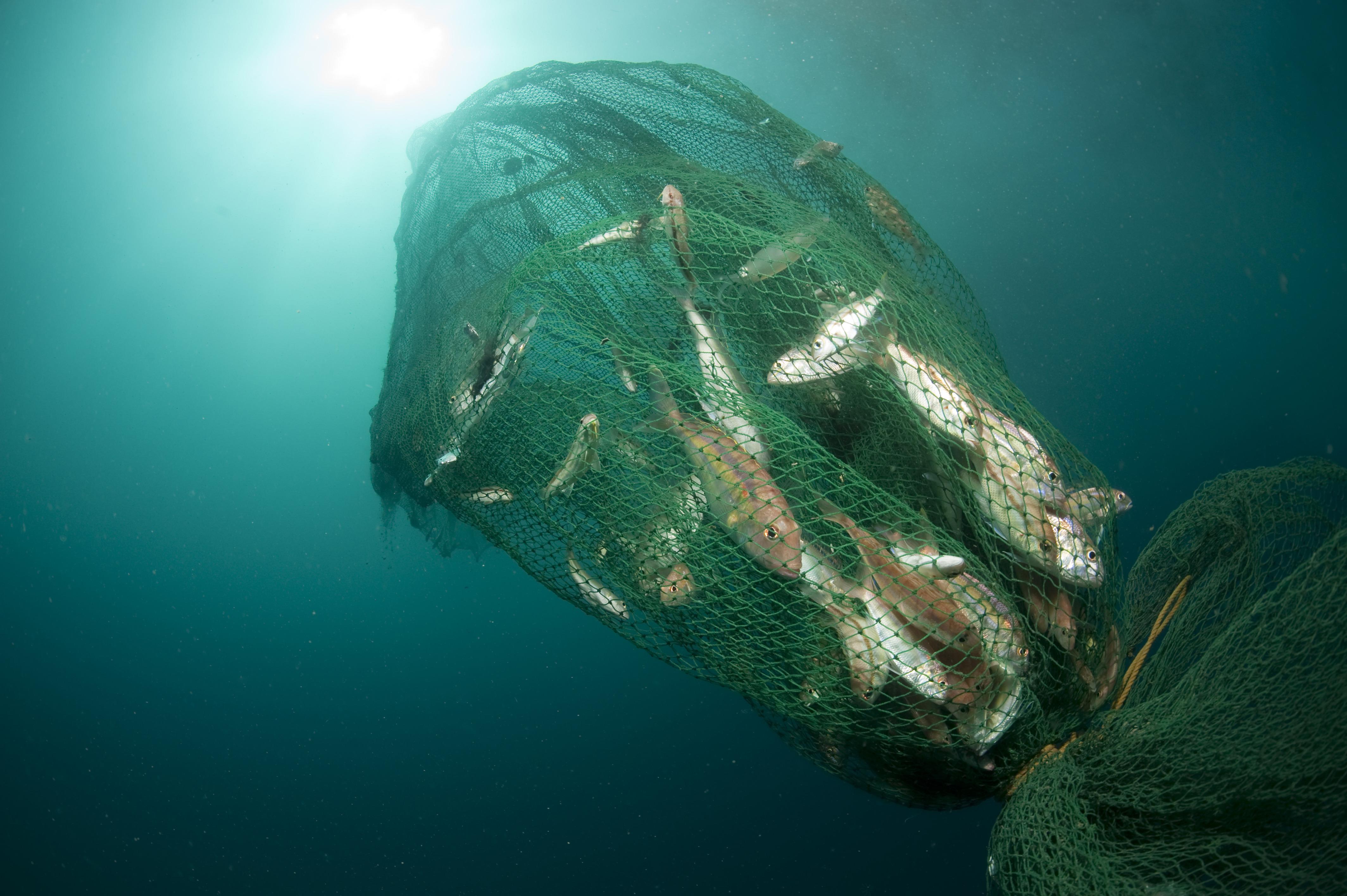 Trawl dan Cantrang Keuntungan yang Buntung  WWF Indonesia