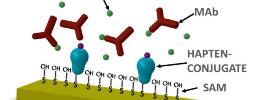 Carbaryl Biosensor based on antibody detection