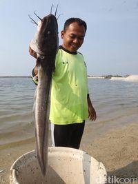 Ikan Ketang Ketang : ketang, Mengerikan!, Penampakan, Pencemaran, Sungai, Jakarta, Halaman