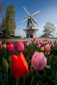 Taman Terindah Di Dunia : taman, terindah, dunia, Mengintip, Taman, Bunga, Tulip, Terindah, Dunia