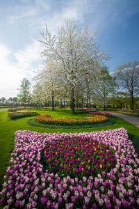 Taman Terindah Di Dunia : taman, terindah, dunia, Mengintip, Taman, Bunga, Tulip, Terindah, Dunia, Cute766