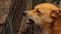 Cara Cegah Penularan Penyakit dari Anjing dan Kucing Liar