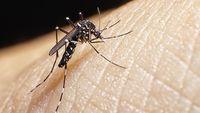 Indonesia Rentan Penyebaran Virus Zika