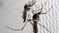 Seluk Beluk Virus Zika: Evolusi Hingga Penyebarannya