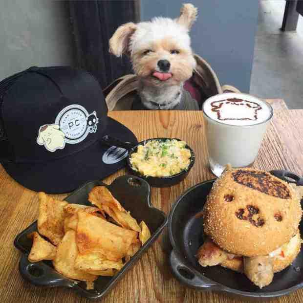 Instagram/Popeye The Foodie Dog