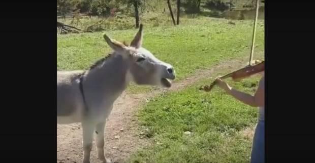 YouTube/Rumble Viral