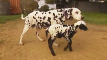 dog-and-lamb-696x363