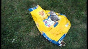 dog-drags-bag-kittens-696x362