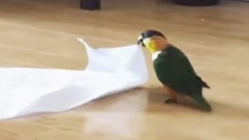 parrot-plays-with-paper-696x362