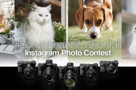[Event] 2019 Sony α 系列 Instagram 動物攝影比賽~徵件超展開!最萌寵物星人 IG 集合囉!