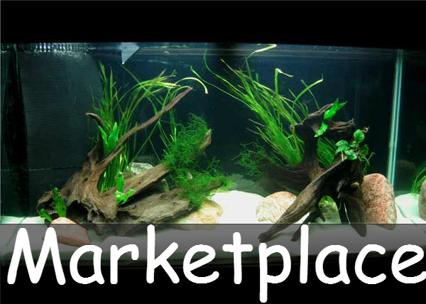 90g-plantedtank-lg(1)