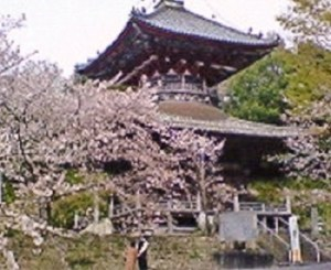 第8番札所 普明山 真光院 熊谷寺 多宝塔と桜。