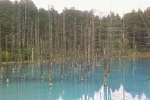 美瑛の青池。