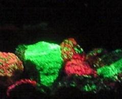 2009/09/07 10:24 紫外線で光る鉱石③