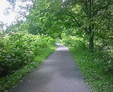 2010/07/02 13:27 走りやすい木陰。