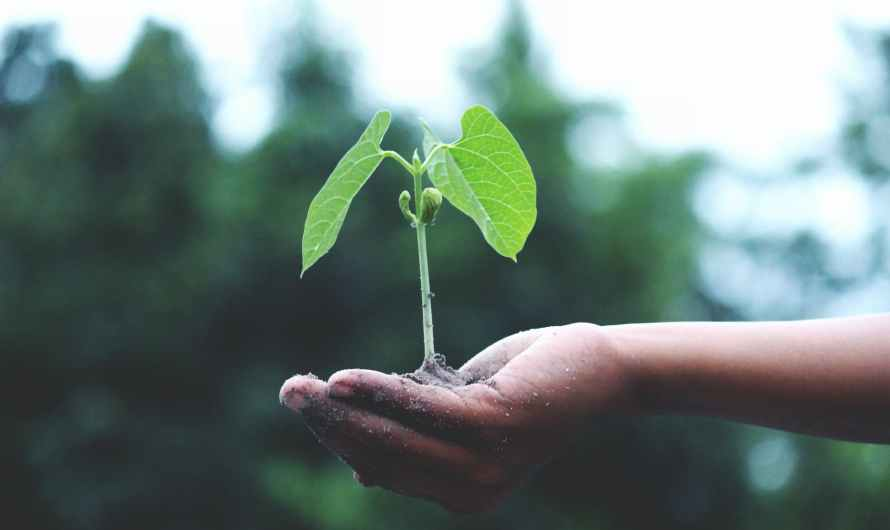 """Globant ayuda a organizaciones a vivir una """"economía verde"""""""