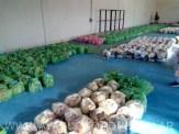 Consejo escolar entrega alimentos 14 7 2020 10 [800x600]