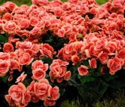 Fiesta Nacional de la Flor 2020 3