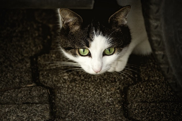 cat-207583_640.jpg