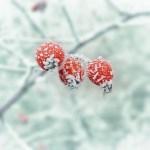 【為替FX】冬時間はいつから変わるの?2016年