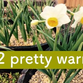#2 pretty warm